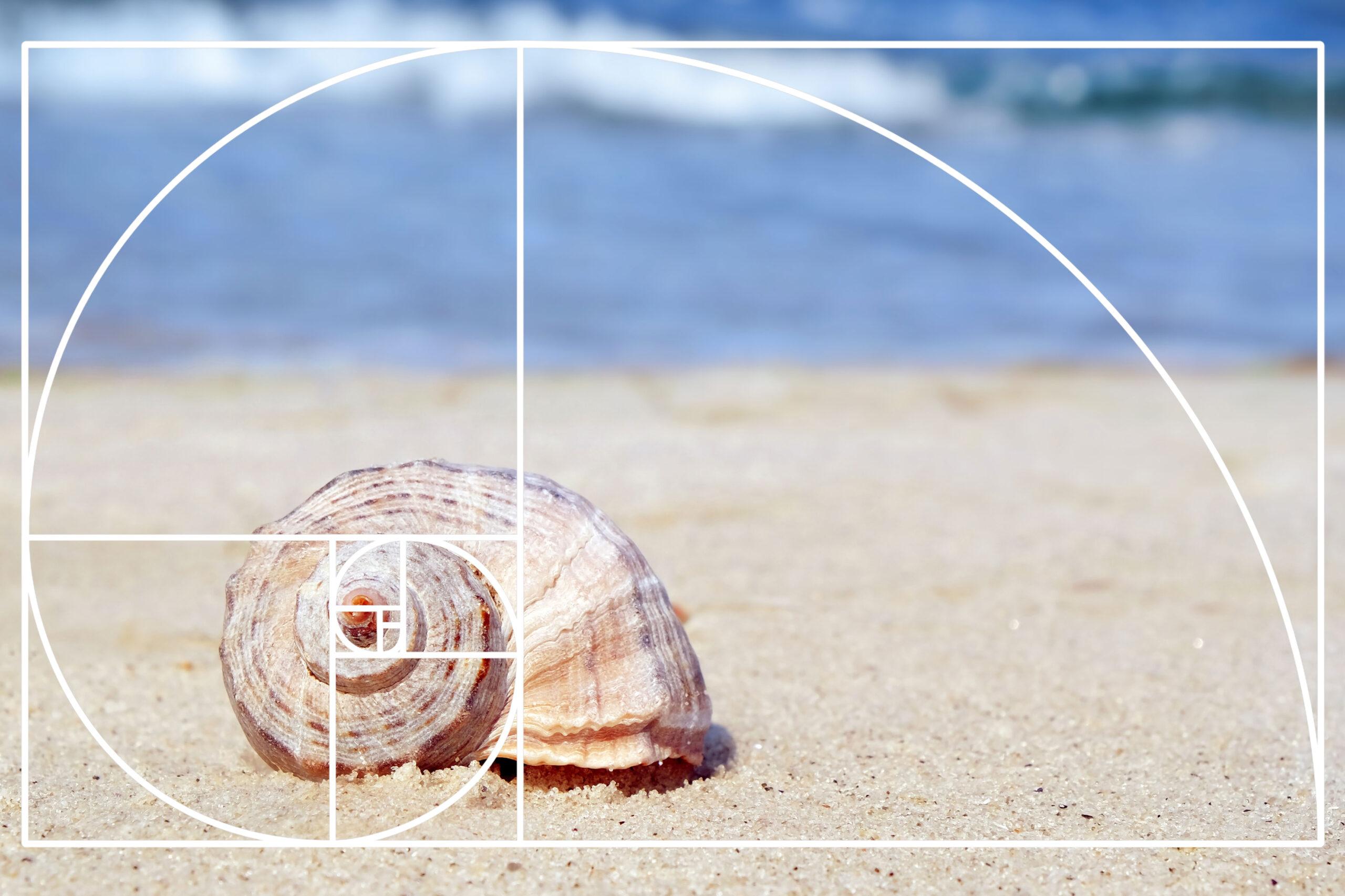 Fibonacci-tallene naturen gylne snitt